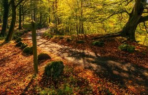 So schön kann der Herbst aussehen...